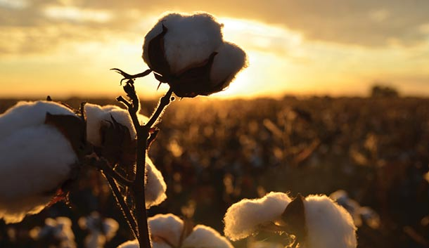 Narrabri is noted for its cotton industry